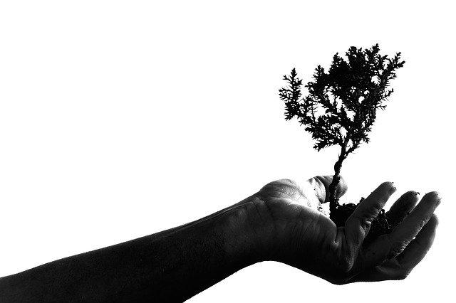 Help Us Plant 550 Trees Oct. 16, 17, 18!